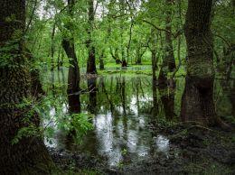 Letea forest