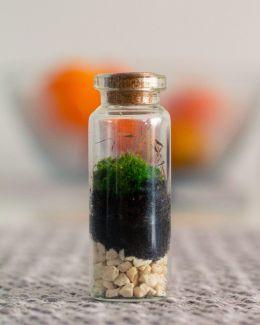 Mini Moss #3