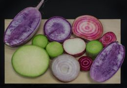 Onion and radishes Picture