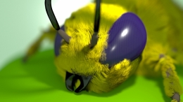 The Bee Picture