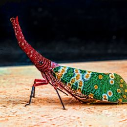 ElephantWeevil