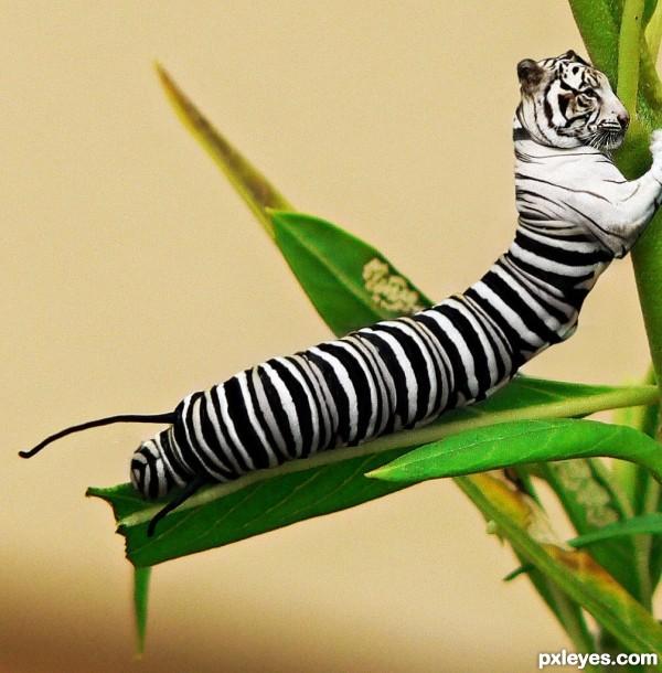 Caterpillar photoshop picture