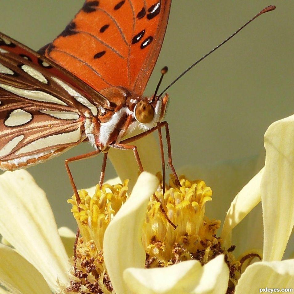 Nectar Buffet