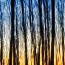 intentional camera motion photography contest