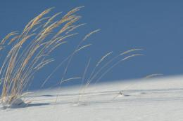 WinterGrass