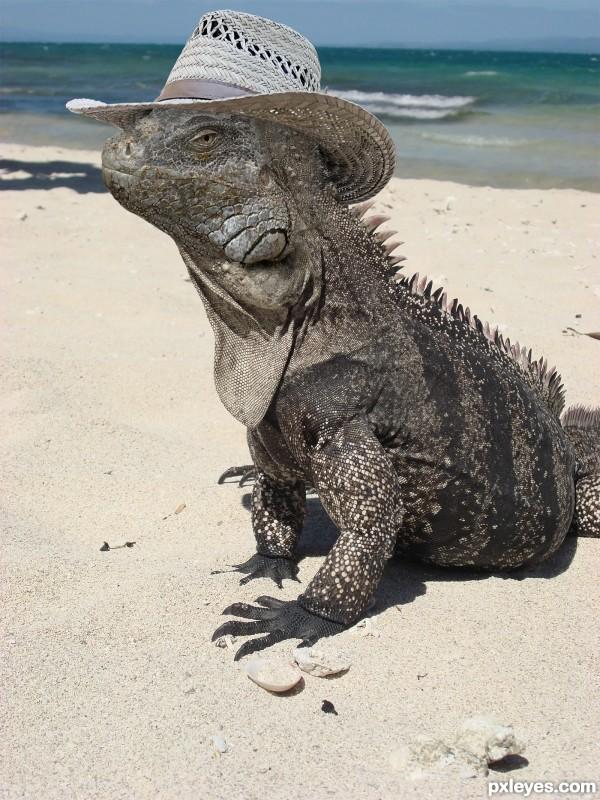 Iguana go on Holiday