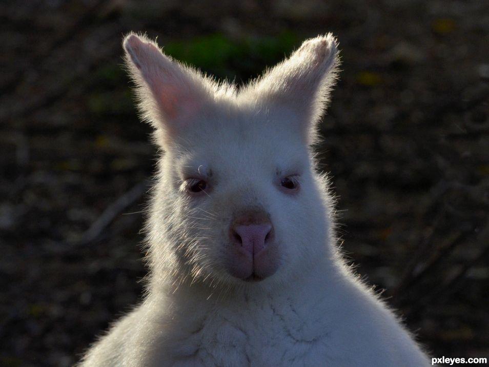 Im not a rabbit, im a kangaroo !