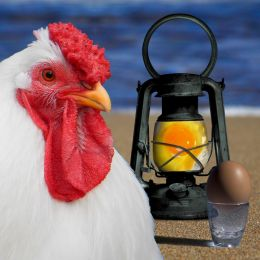 ChickenLight
