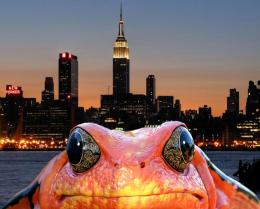City Frog Picture