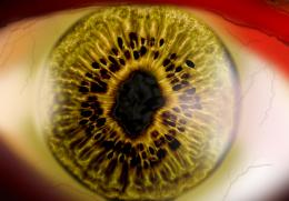 Human_Eye Picture