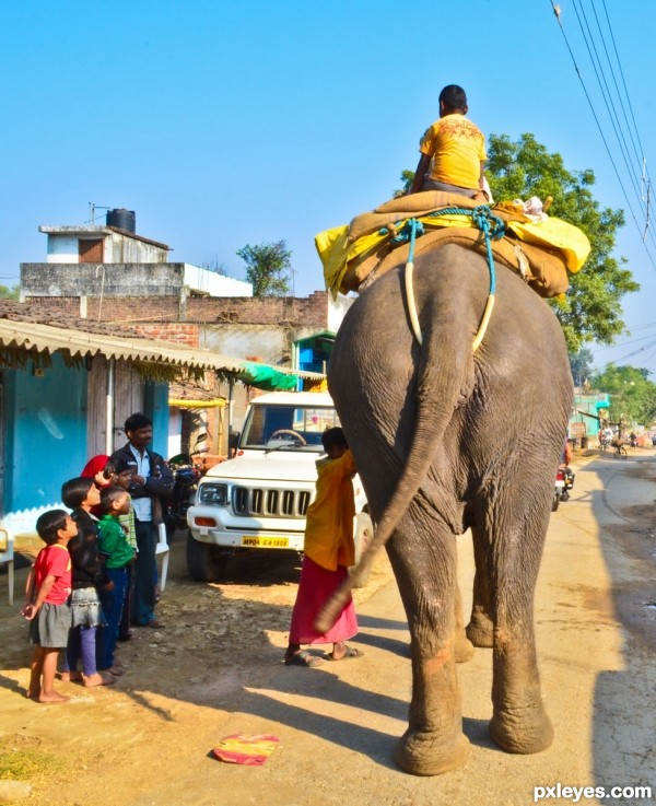 Standing elephant,moving tail
