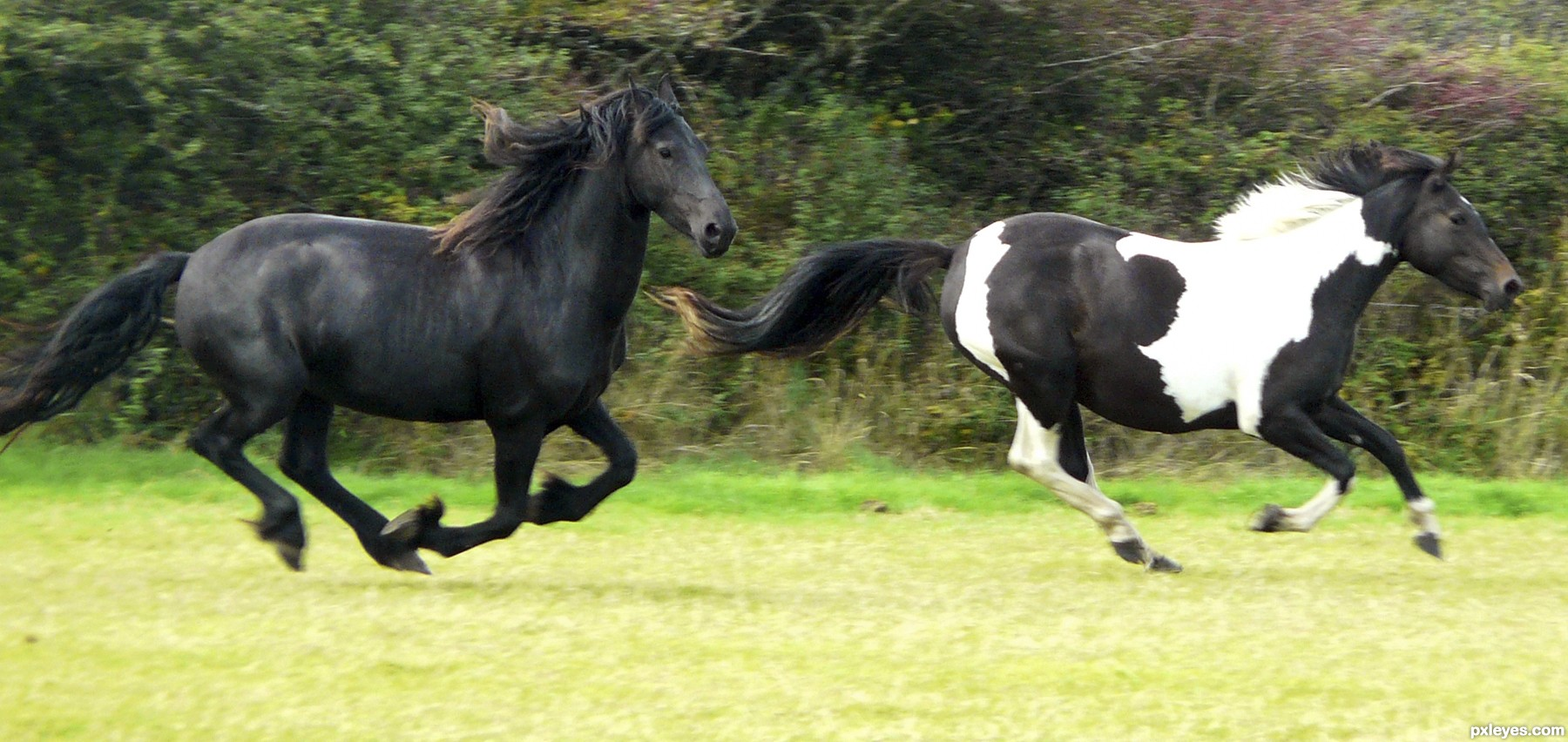 Running horses pictures - photo#28