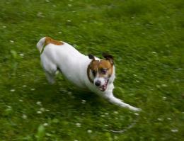 The joy of speed