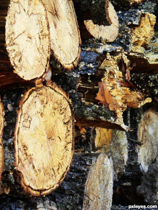 L is for Logs
