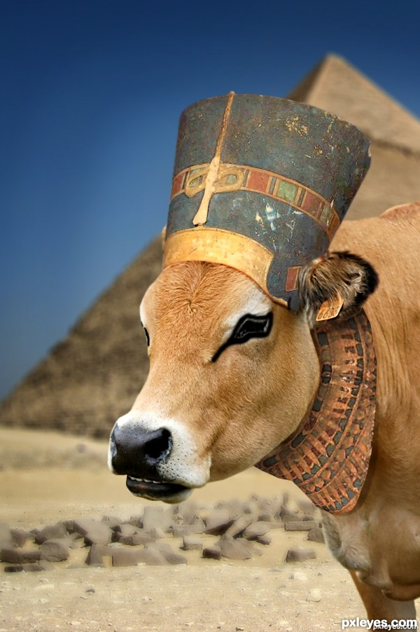 Egyptian cow