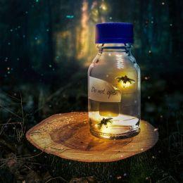 Fireflydream
