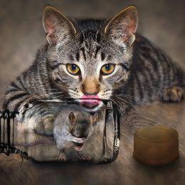 Bottledcatfood