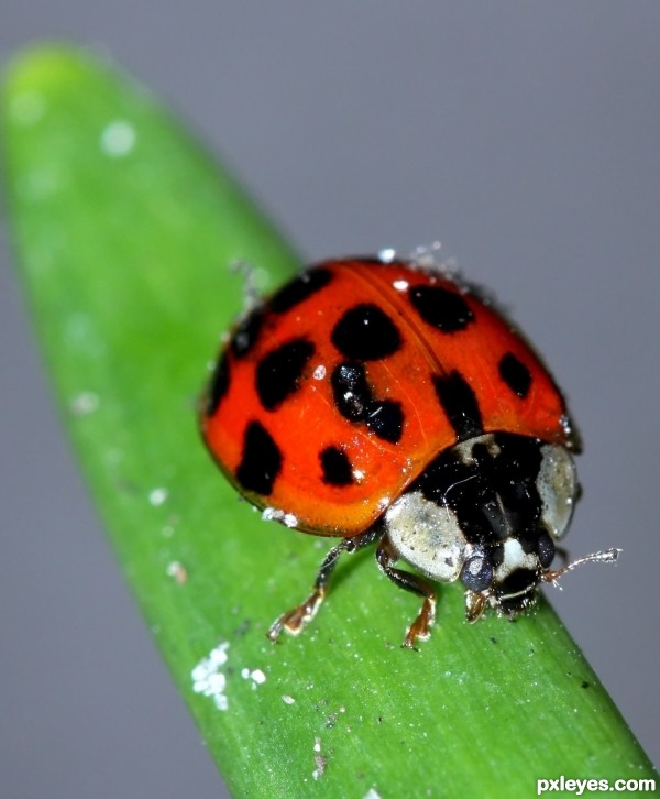 the lucky ladybug