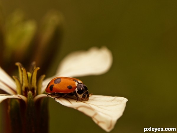 on a flower in the garden
