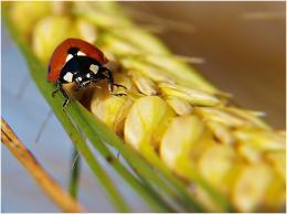 Ladybirdtrip