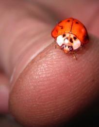LadybugBuddy