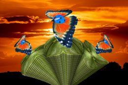Blue Helmet Ladybird Butterflies