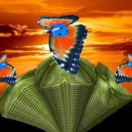 BlueHelmetLadybirdButterflies