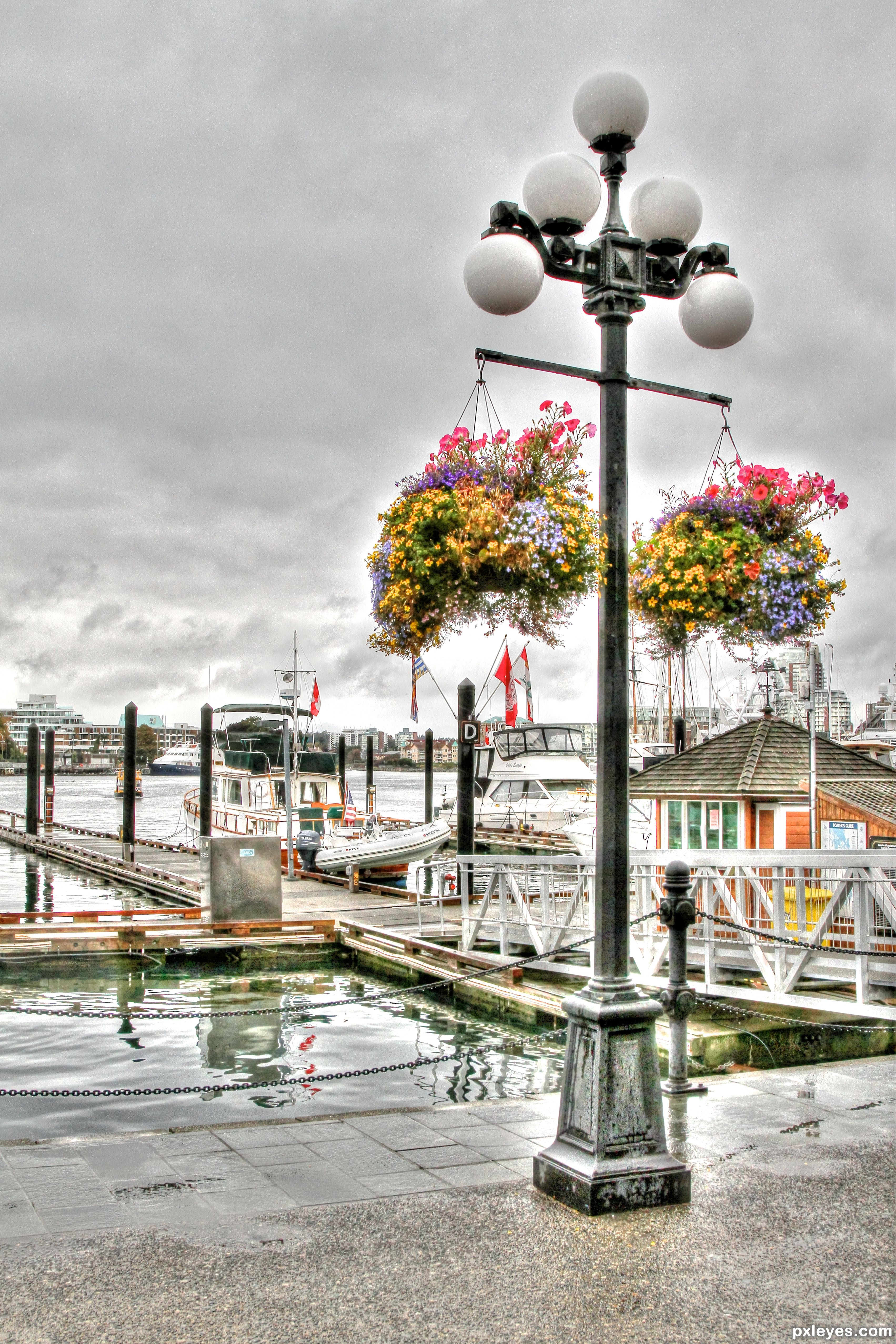 Street Lamp Victoria Bc Picture By