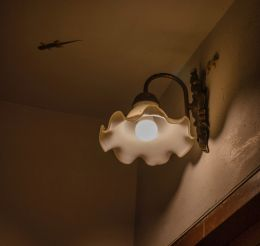 lamp and life