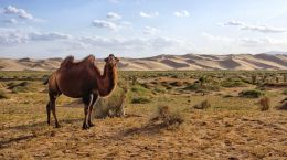 The Gobi Desert Picture