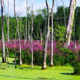 SummerSwamp