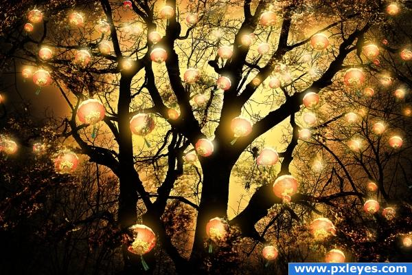 The Lanterns Tree