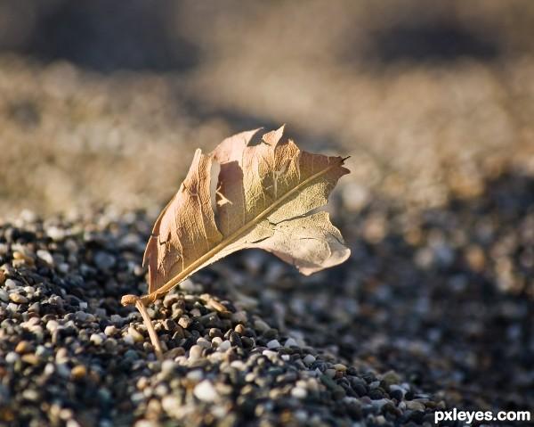 a worthless leaf