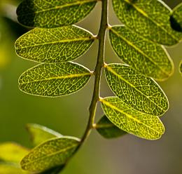 Afternoon sun on small leaves