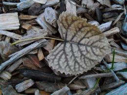 camofoliage