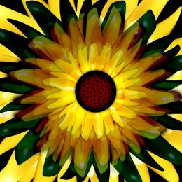 So Sunflowery Picture