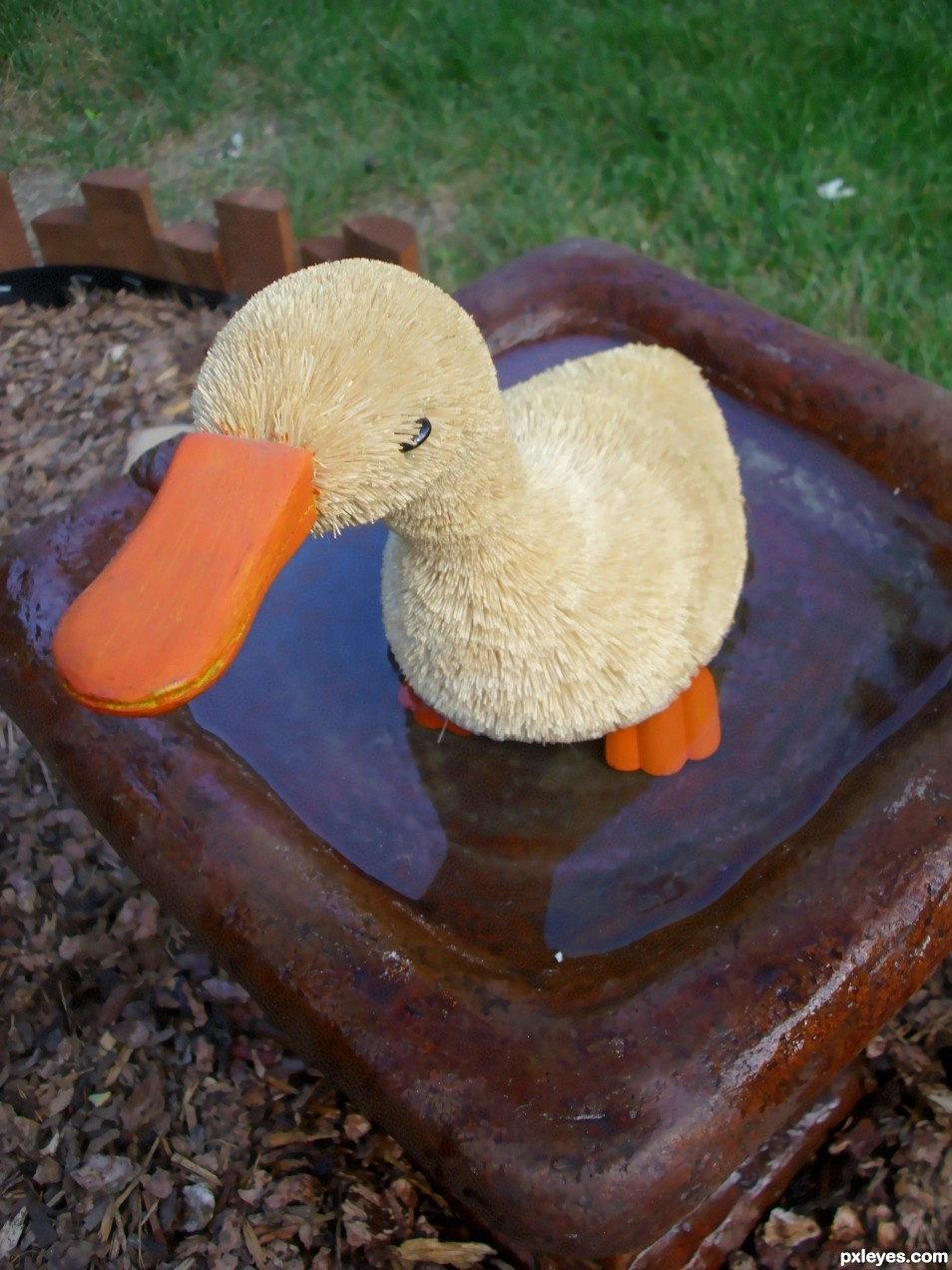 Duck Bath