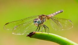 Dragon fly Picture