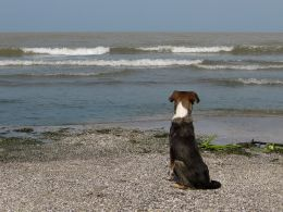 Dog by the sea