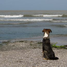 Dog by the sea Picture