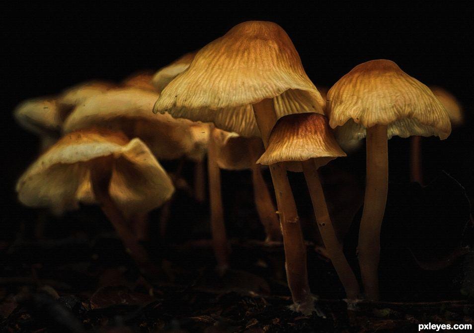 Fungi Family