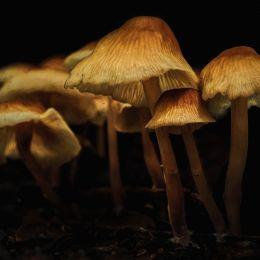 FungiFamily