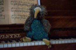 Kinky kiwi on a keyboard