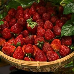ScintillatingScrumptiousSumptuousSensationalStrawberries