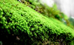 grow my Sporophyte Picture
