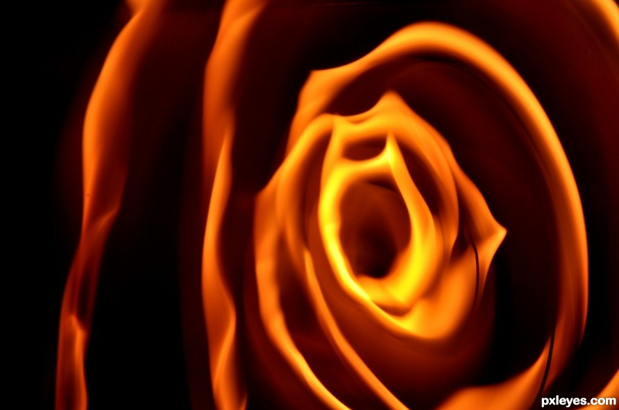 A rose of fire