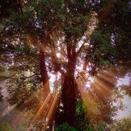 TreeOfLight