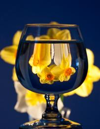 springtime in a glass