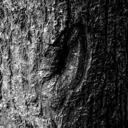 Treegradient