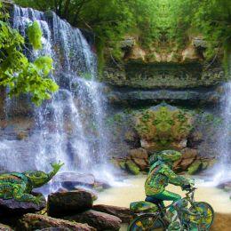 iguanafamily